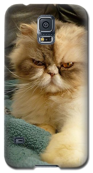 Do I Look Amused? Galaxy S5 Case by Vicki Spindler