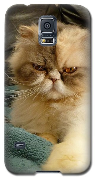Do I Look Amused? Galaxy S5 Case