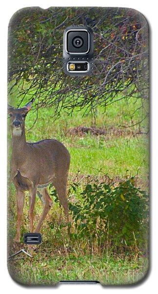 Doe A Deer Galaxy S5 Case by Bill Woodstock