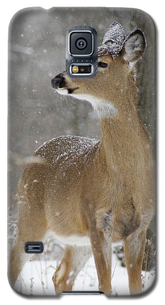 Doe In The Snow Galaxy S5 Case