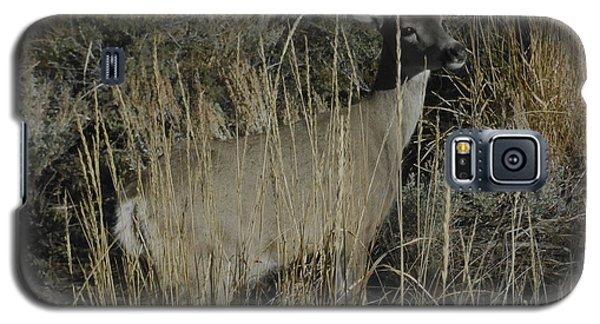 Doe Mule Deer Galaxy S5 Case