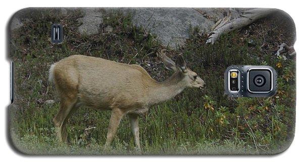 Doe Mule Deer Feeding Galaxy S5 Case