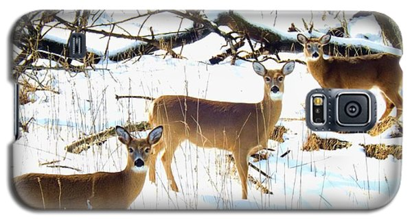 Does In The Snow Galaxy S5 Case