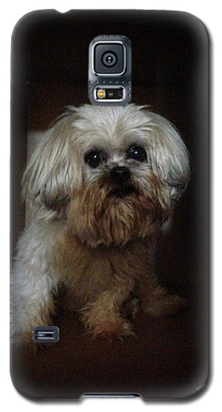 Dog In The Box Galaxy S5 Case