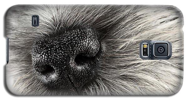 Dog Nose  Galaxy S5 Case by Stephanie Frey
