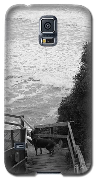 Galaxy S5 Case featuring the photograph Dog On Sea Stairs by Amanda Holmes Tzafrir
