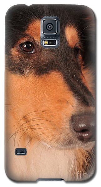 Dog Portrait Galaxy S5 Case by Randi Grace Nilsberg