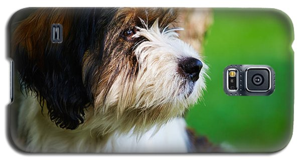 Galaxy S5 Case featuring the photograph Dog Sitting Next To A Tree by Nick  Biemans