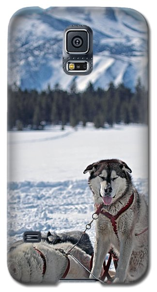 Galaxy S5 Case featuring the photograph Dog Team by Duncan Selby