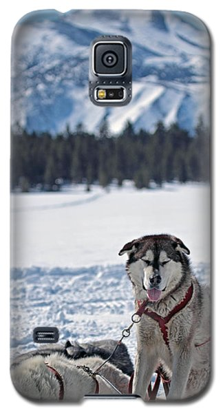 Dog Team Galaxy S5 Case by Duncan Selby