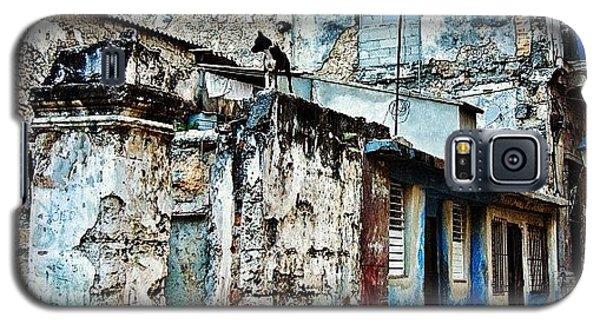 Igdaily Galaxy S5 Case - Dog Watching - Havana by Joel Lopez