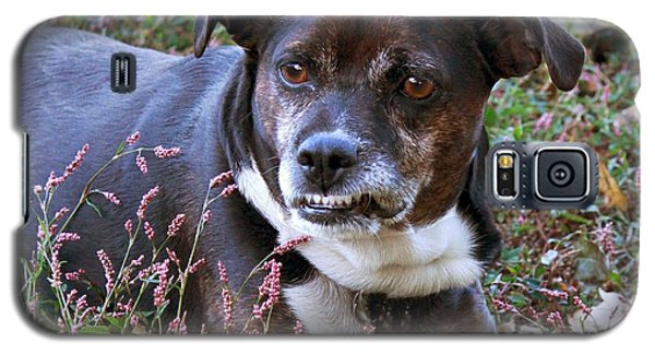 Galaxy S5 Case featuring the photograph Dogg by Bonnie Willis