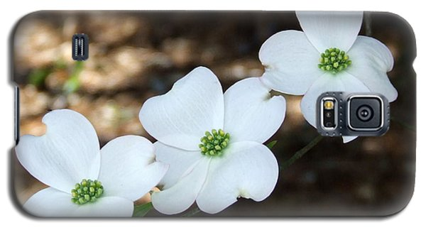 Dogwood Galaxy S5 Case
