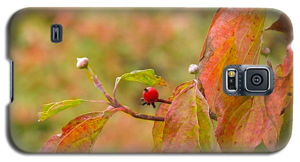 Galaxy S5 Case featuring the photograph Dogwood Berrie by Nick Kirby