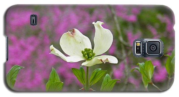 Dogwood Bloom Against A Redbud Galaxy S5 Case by Nick Kirby