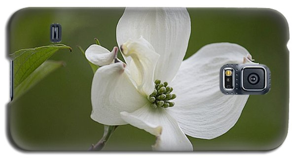 Dogwood Blossom Galaxy S5 Case