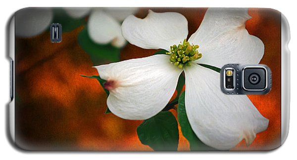 Dogwood Blossom Galaxy S5 Case by Brian Wallace