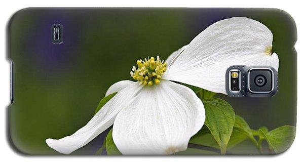 Dogwood Blossom - D001797 Galaxy S5 Case by Daniel Dempster