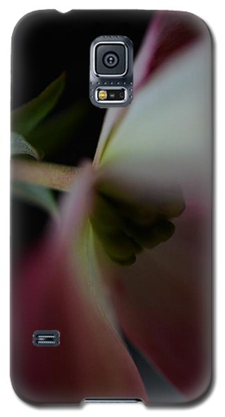 Galaxy S5 Case featuring the photograph Dogwood Flower by Marianna Mills