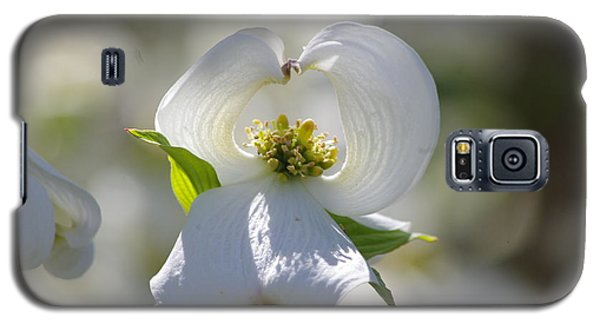 Galaxy S5 Case featuring the photograph Dogwood Flower by Tannis  Baldwin