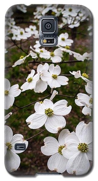 Dogwoods Galaxy S5 Case by Wayne Meyer