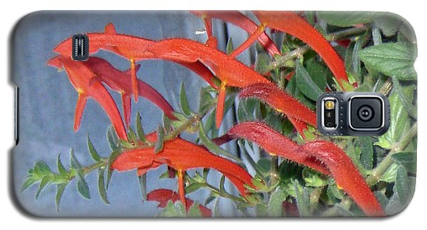 Galaxy S5 Case featuring the photograph Dolphin Plant by Brenda Brown