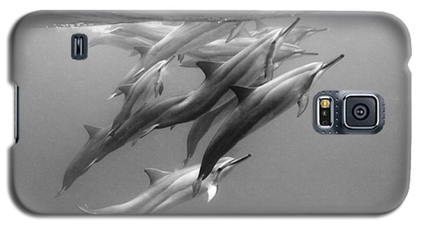 Dolphin Pod Galaxy S5 Case by Sean Davey