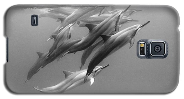 Dolphin Pod Galaxy S5 Case
