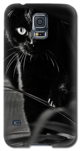 Domestic Black Panther Galaxy S5 Case by Laura Melis