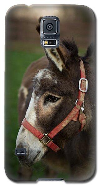 Donkey Galaxy S5 Case by Shane Holsclaw