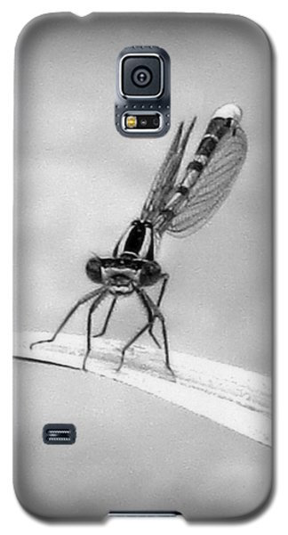 Galaxy S5 Case featuring the photograph Donna The Damselfly by Karen Shackles