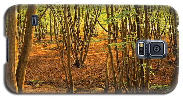 Donyland Woods Galaxy S5 Case by David Davies