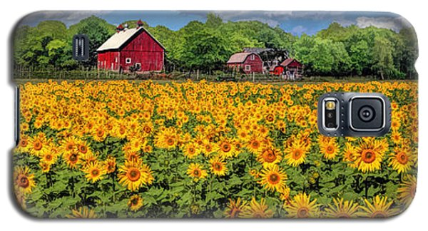 Door County Field Of Sunflowers Panorama Galaxy S5 Case