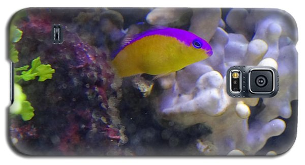 Dottyback After Dinner Galaxy S5 Case