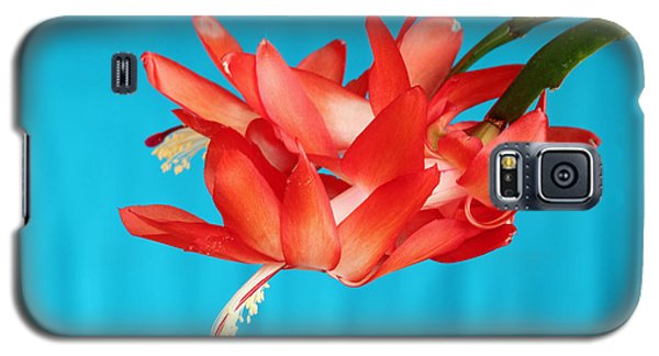 Double Bloom In Red Galaxy S5 Case
