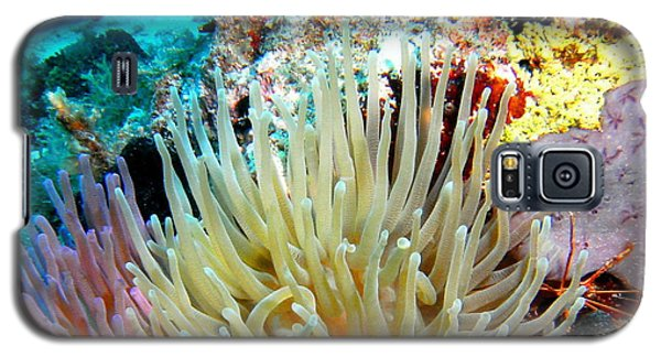 Galaxy S5 Case featuring the photograph Double Giant Anemone And Arrow Crab by Amy McDaniel