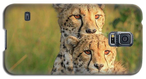 Cheetah Galaxy S5 Case - Double Team by Jaco Marx
