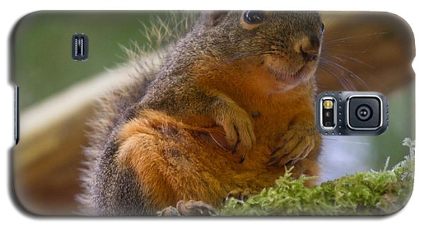 Douglas Squirrel Galaxy S5 Case