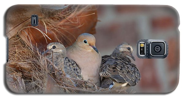 Galaxy S5 Case featuring the photograph Dove Nest 4 by Gregory Daley  PPSA