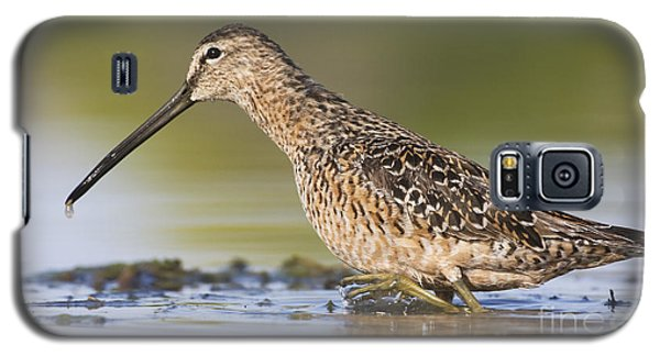 Dowitcher In The Water Galaxy S5 Case