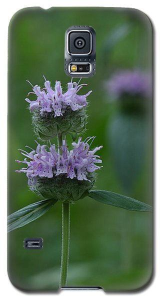 Downy Wood Mint Galaxy S5 Case