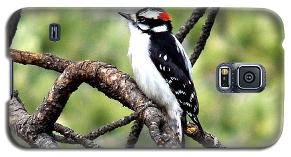 Downy Woodpecker Galaxy S5 Case by Marilyn Burton
