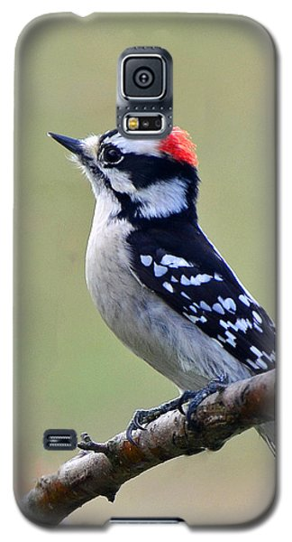Downy Woodpecker Galaxy S5 Case by Stephen Flint