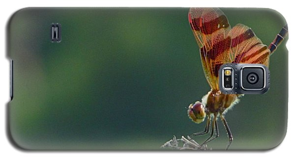 Dragonfire Galaxy S5 Case by Tim Good