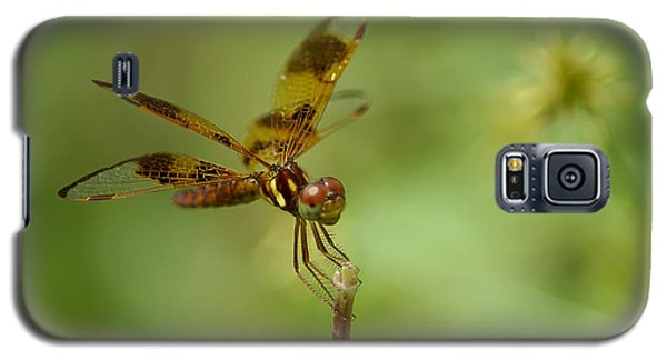 Galaxy S5 Case featuring the photograph Dragonfly 2 by Olga Hamilton