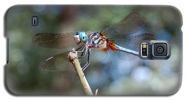 Dragonfly Aqua 1 Galaxy S5 Case by Tamyra Crossley