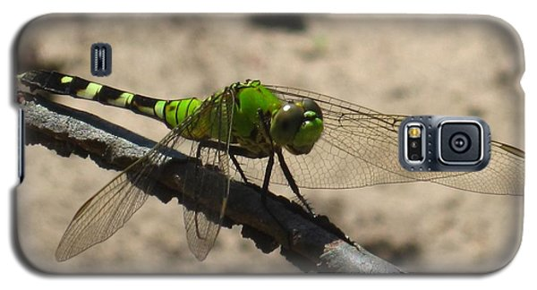 Galaxy S5 Case featuring the photograph Dragonfly Eastern Pondhawk by Margaret Newcomb