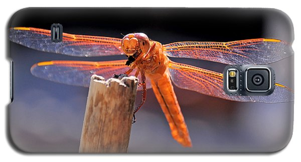 Dragonfly Eating An Insect Galaxy S5 Case