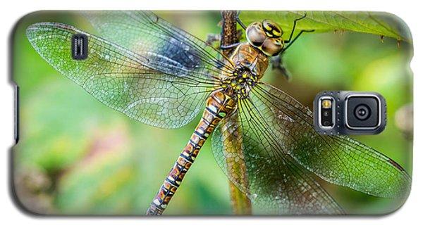 Dragonfly. Galaxy S5 Case