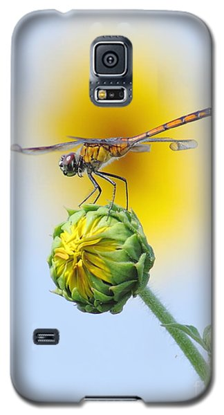 Dragonfly In Sunflowers Galaxy S5 Case